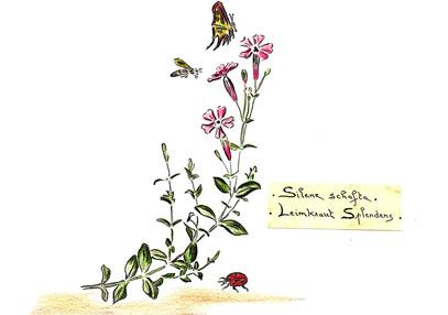 Garten Zeichnung Philippe Geenons